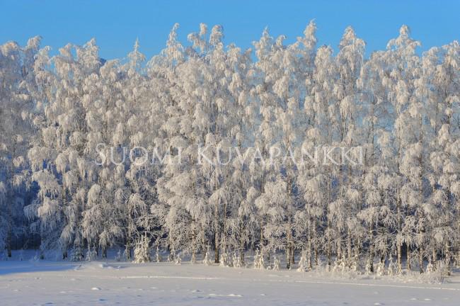 Lumi Laukut Suomi : Talvi lumi tykky kategoriat suomi kuvapankki
