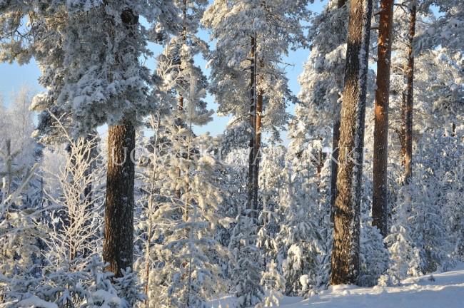Lumi Laukut Suomi : Talvi lumi mets? kategoriat suomi kuvapankki